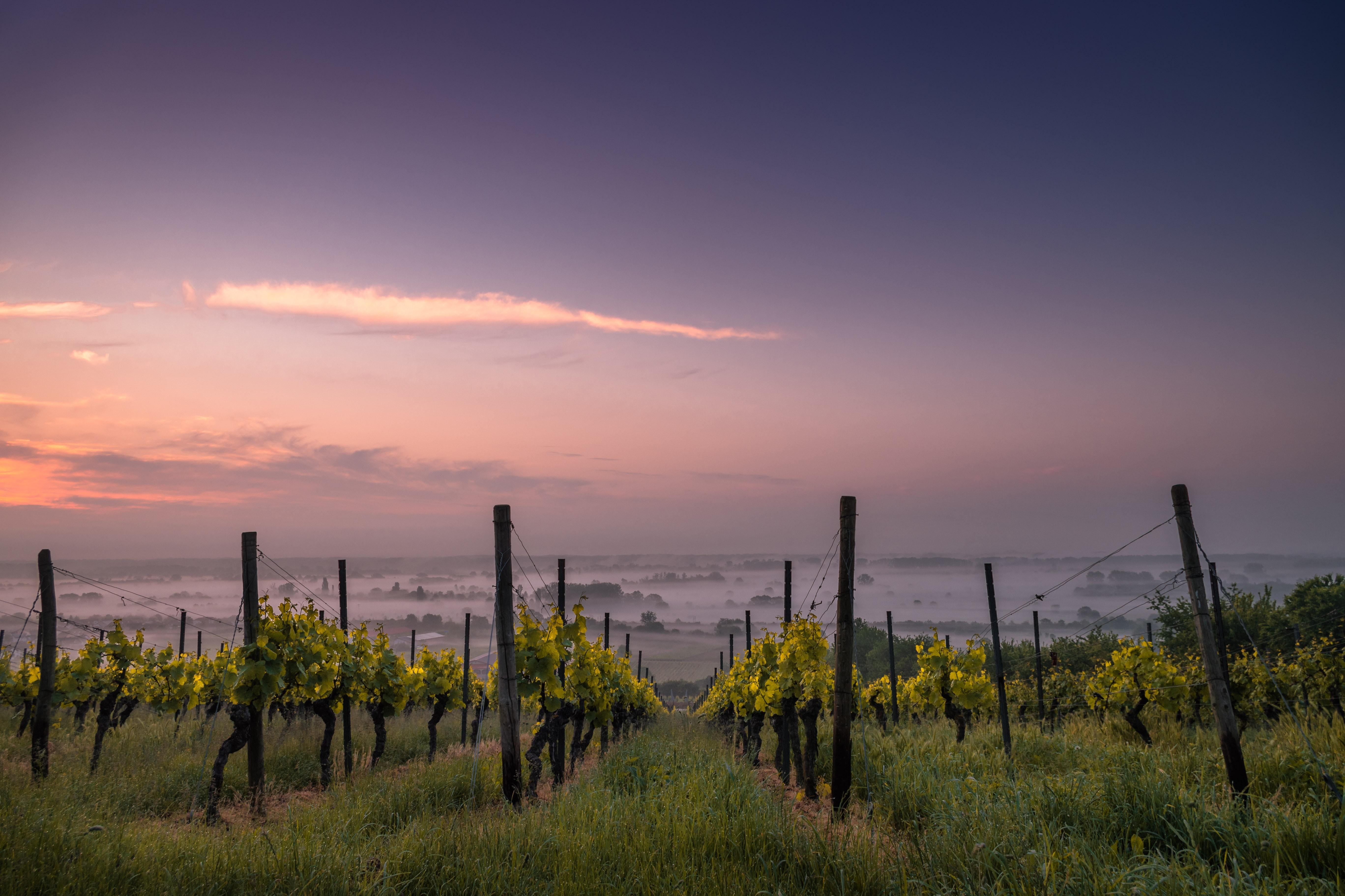 Picture of: Vinopbevaring Bliv Klogere Pa Optimal Vinopbevaring Med Skjold Burne