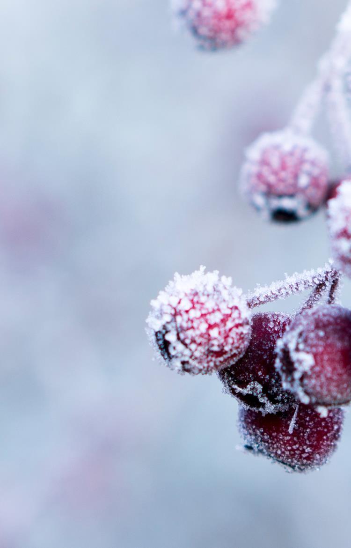 Vinterensvine6.jpg